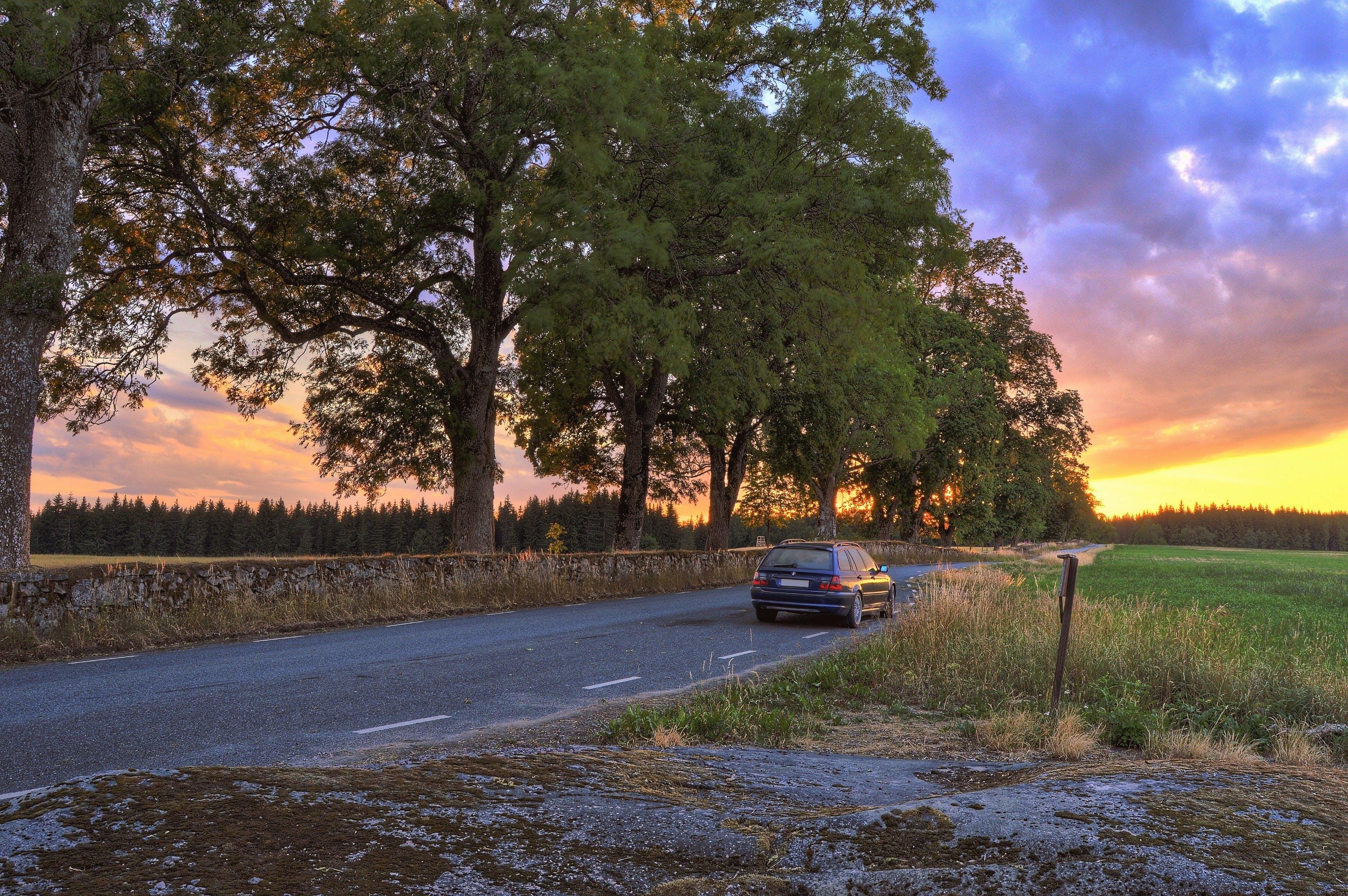 Fotos de stock gratuitas de amanecer, arboles, carretera, coche