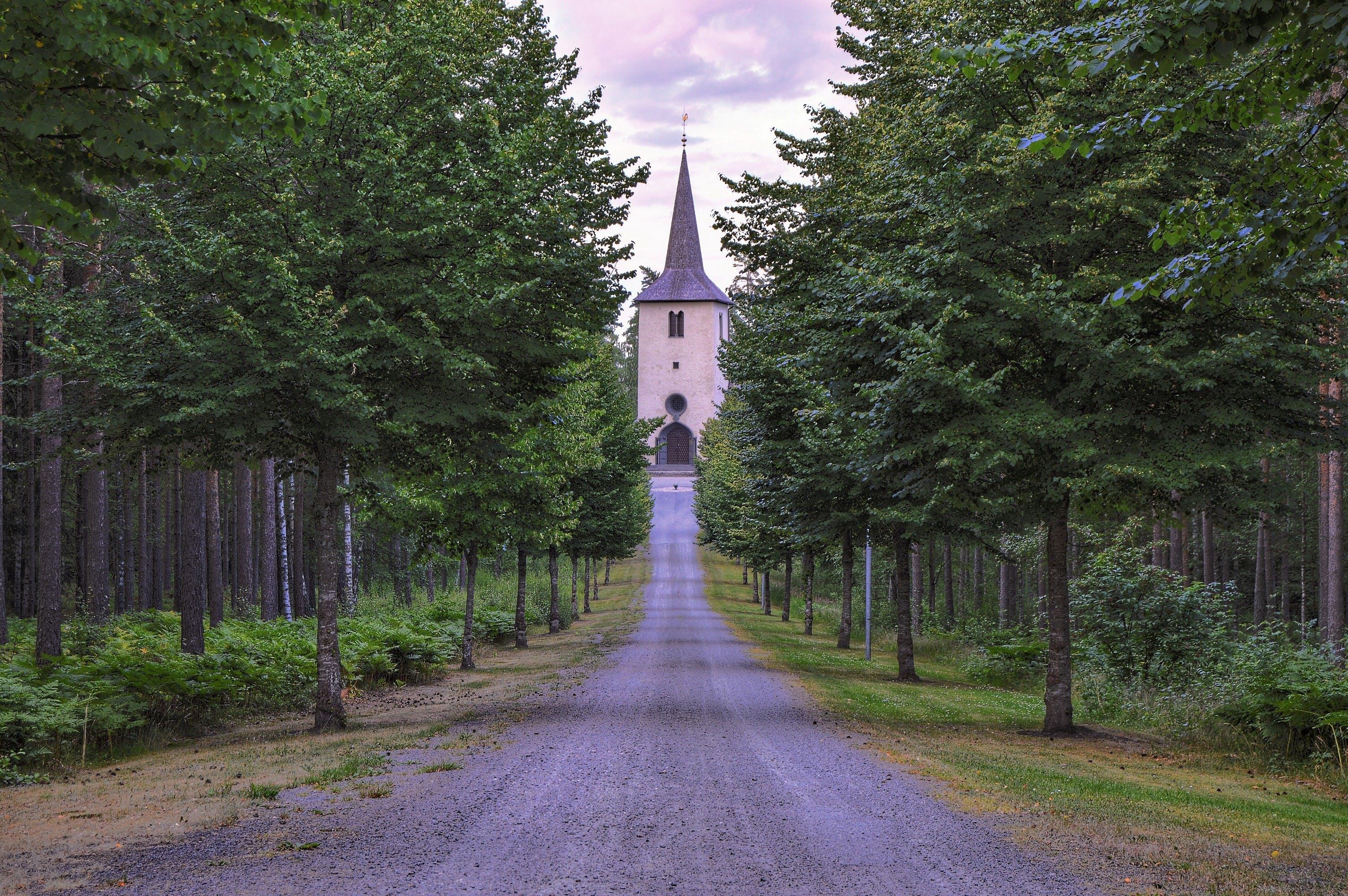 Photos gratuites de arbres, bâtiment, chemin, église