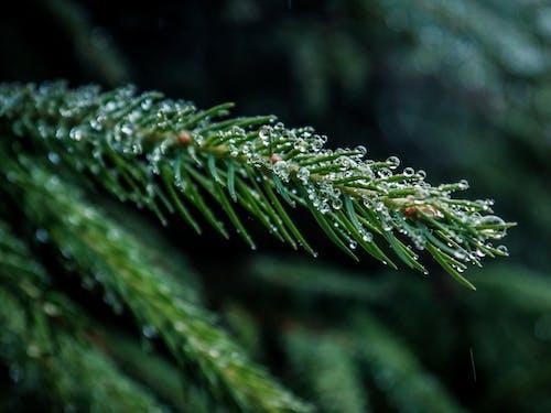 Fotos de stock gratuitas de árbol, gotas de agua, gotas de lluvia, húmedo