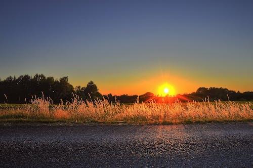 Kostnadsfri bild av dagsljus, gräs, gryning, himmel