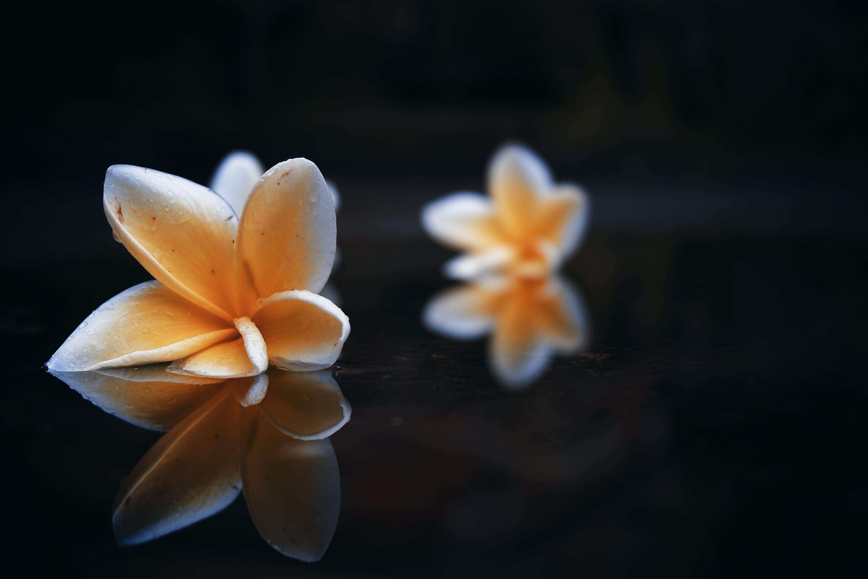 Free stock photo of bali, flower, rain