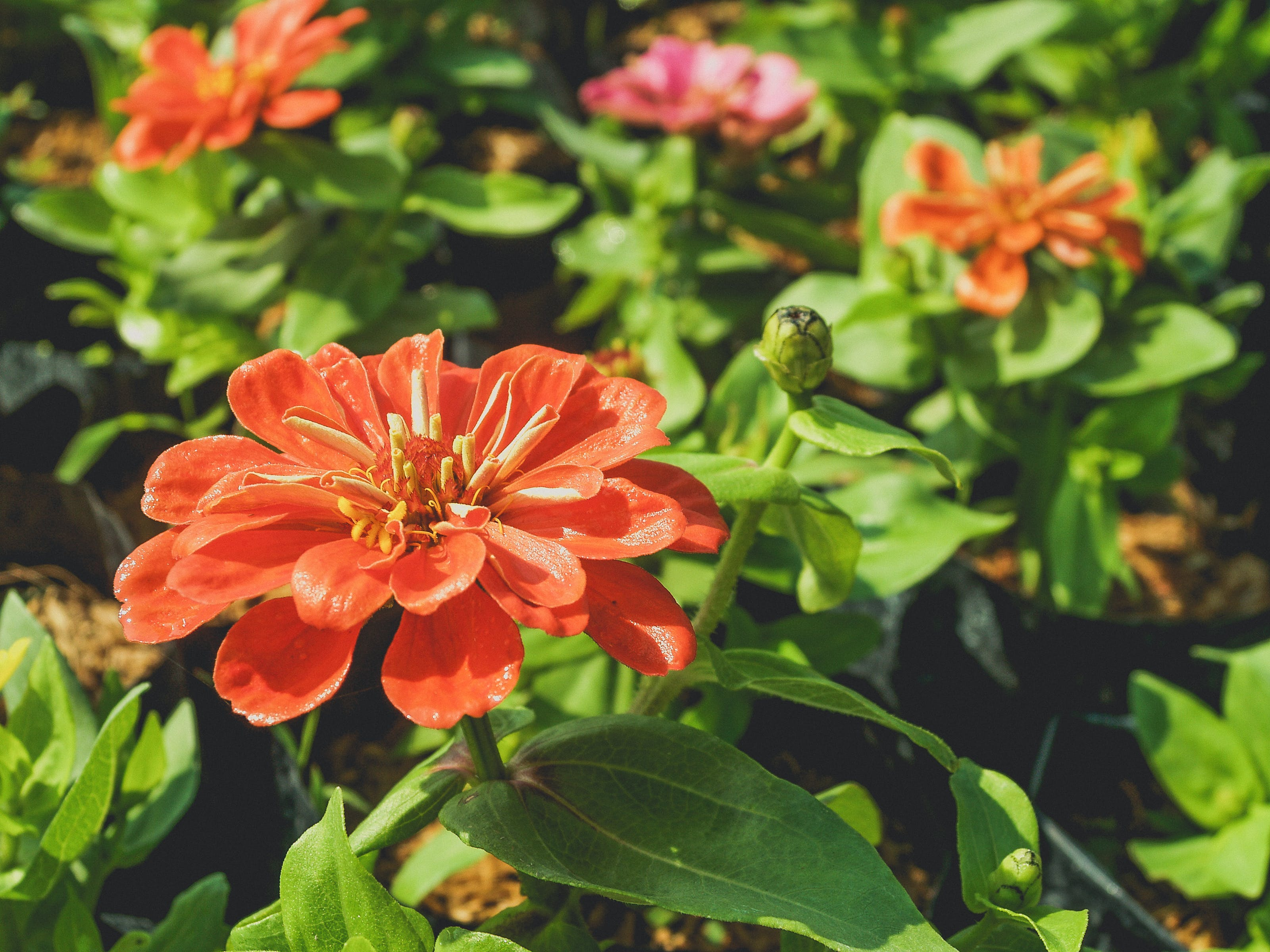 Selective Focus Photo Of Orange Petaled Flower