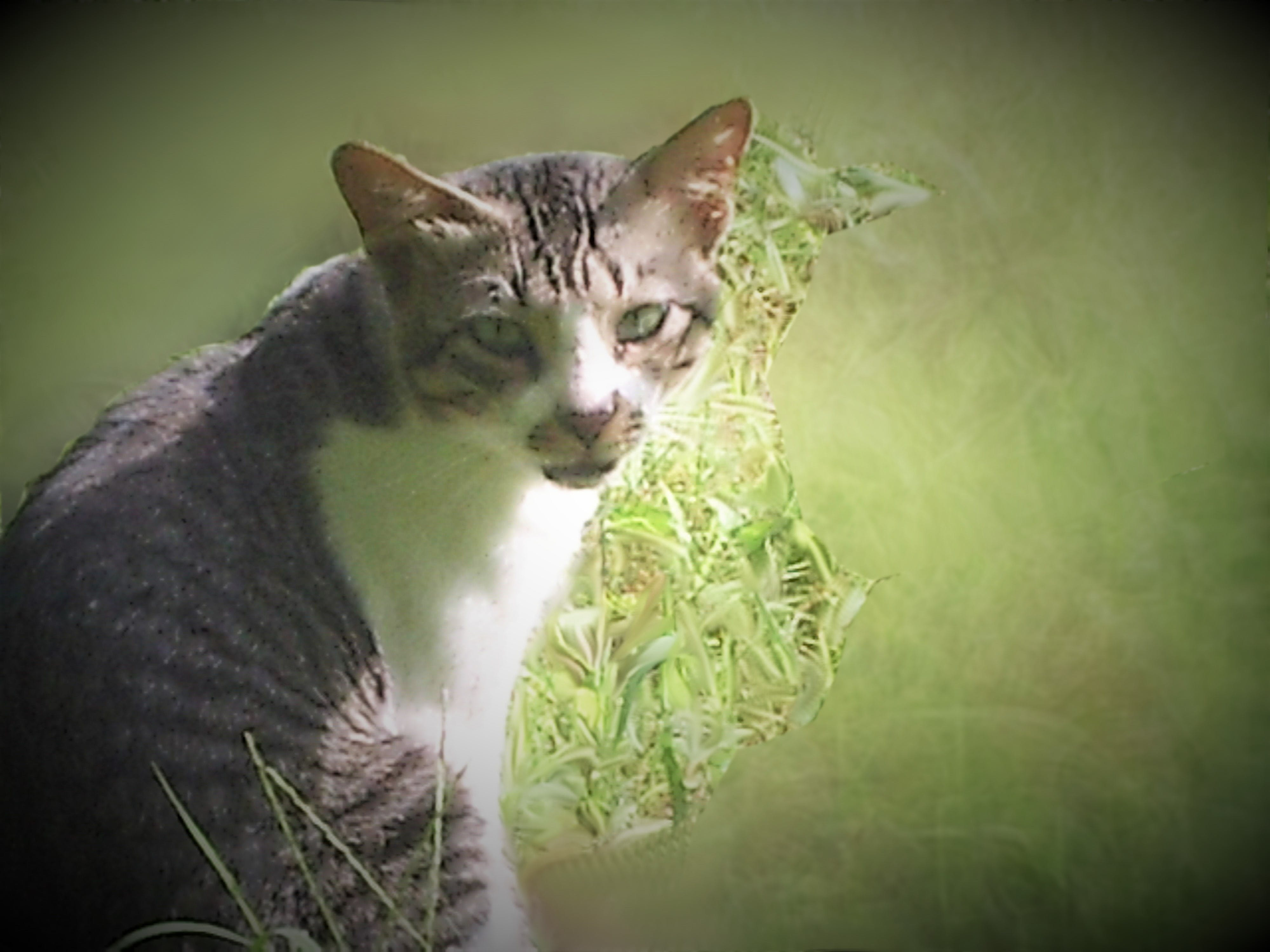 Free stock photo of cat, cat eye, cat face, nature photo
