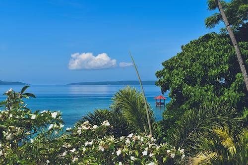 Foto profissional grátis de cabana no meio do oceano emoldurado por plantas