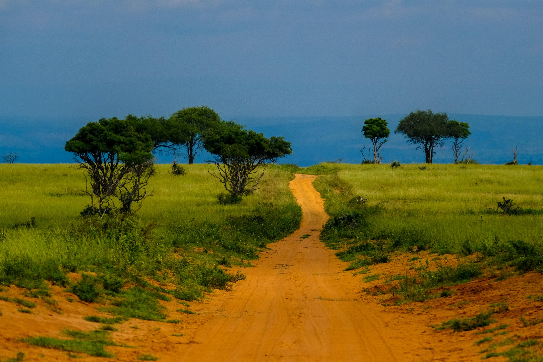 Foto d'estoc gratuïta de arbres, camí de carro, herba, llum del dia