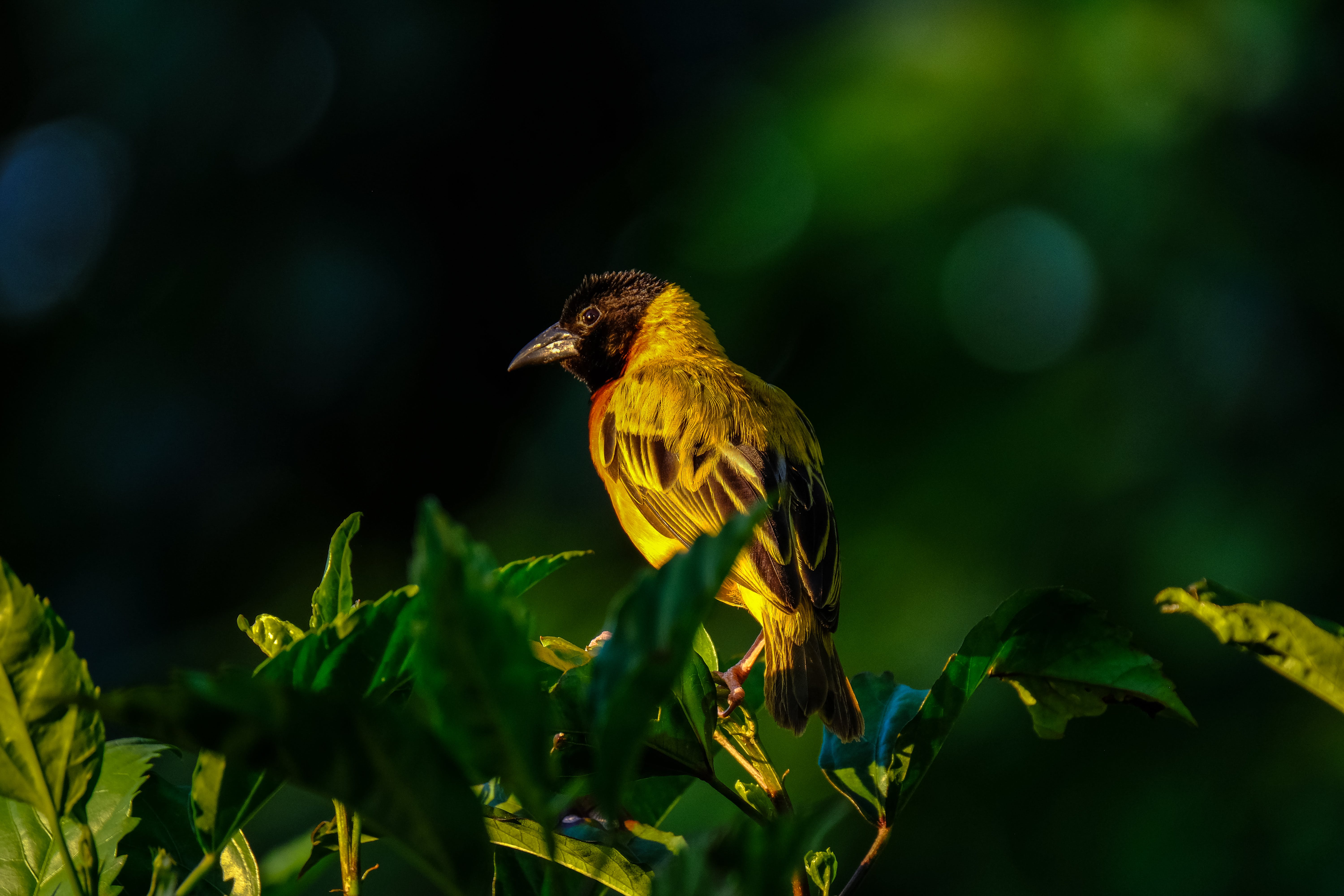 Shallow Focus Photography Of Yellow And Brown Bird On Green Leafed Tree