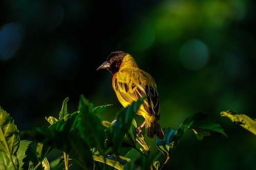 Foto d'estoc gratuïta de animal, macro, plomes
