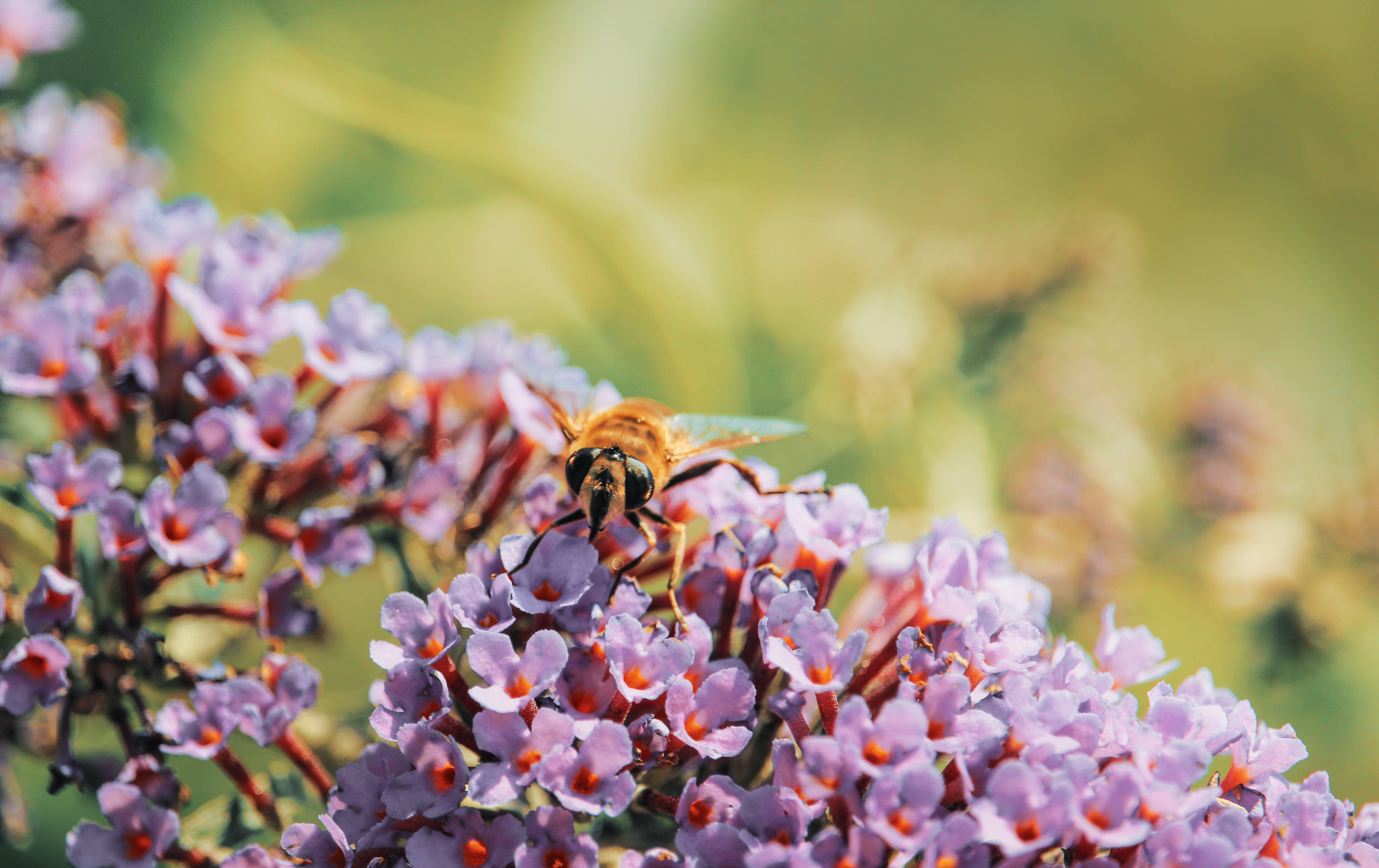 Macro Photography of Yellow Bee on Top of Flowers