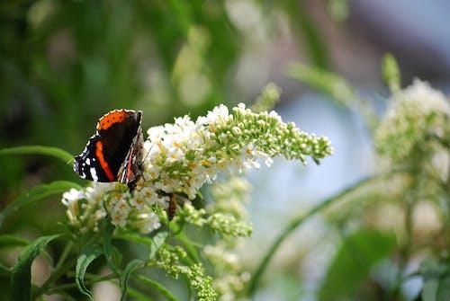花と蝶の無料の写真素材