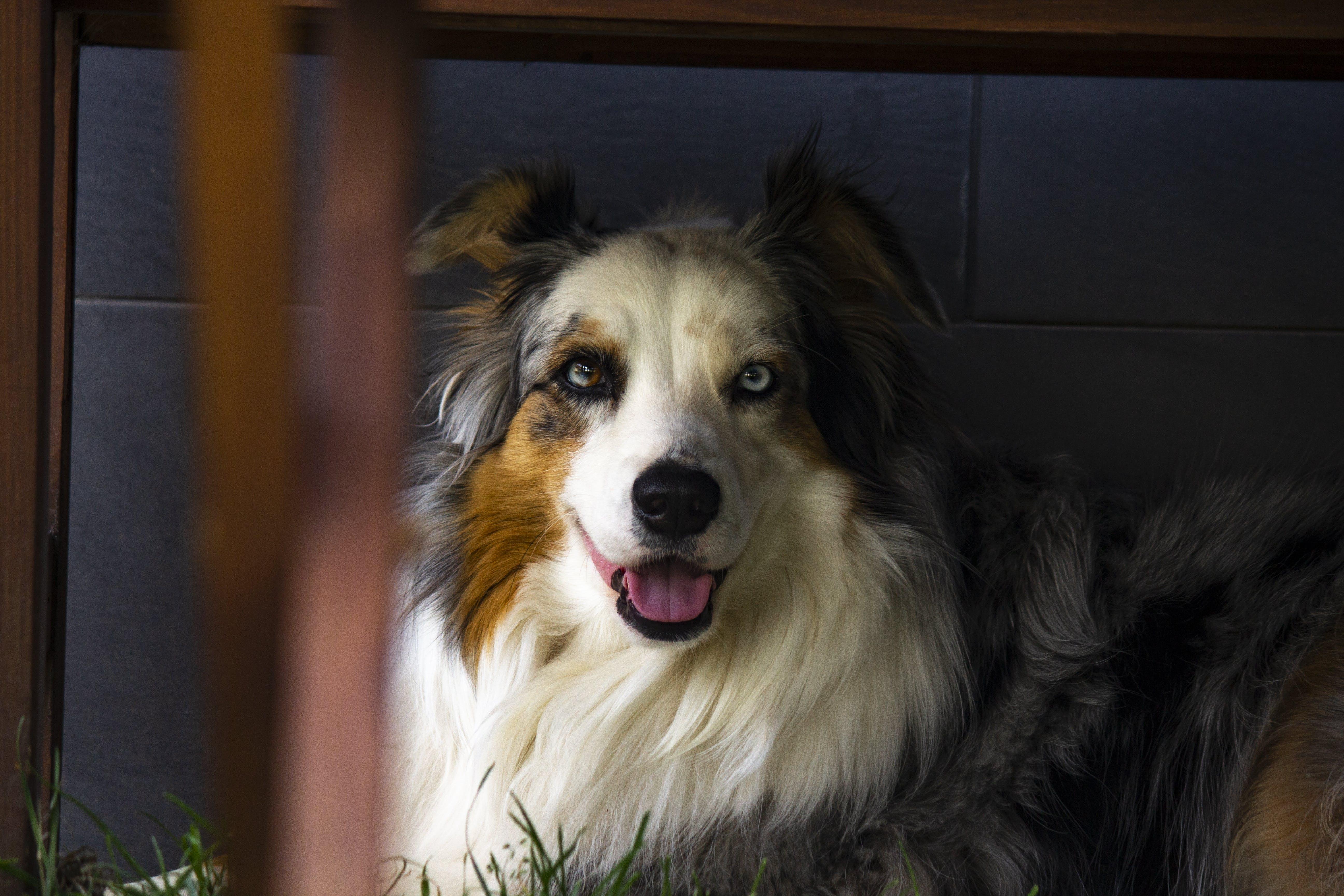 Free stock photo of My dog :)
