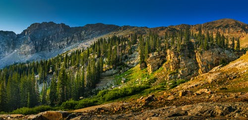 Landscape Photography of Mountain With Trees