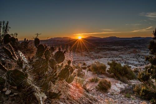 사막, 선인장, 야외, 일몰의 무료 스톡 사진