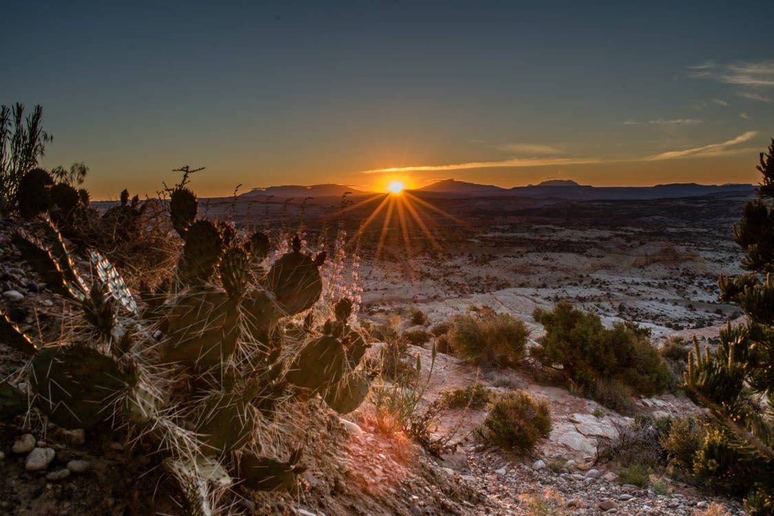 alba, all'aperto, cactus