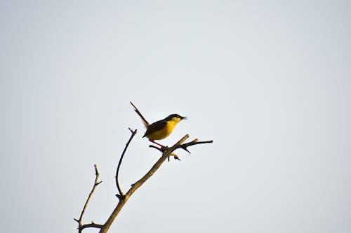 Fotobanka sbezplatnými fotkami na tému #birds, #vták, život vprírode