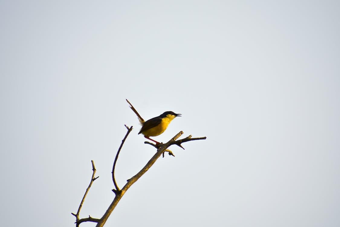 #birds, #lintu, elämää luonnossa