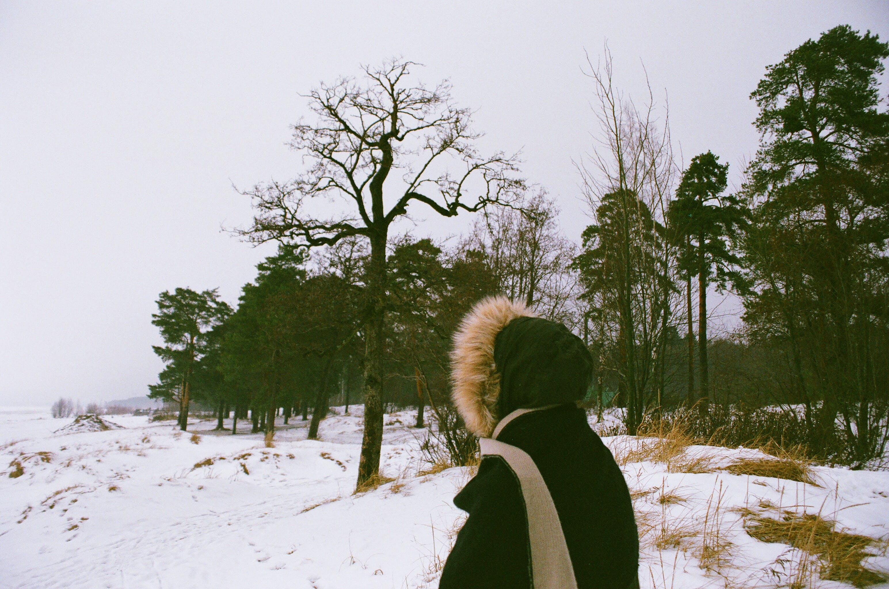 Person Facing Trees during Winter