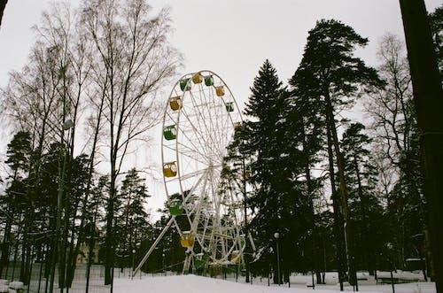 Бесплатное стоковое фото с деревья, дневное время, живописный, зима