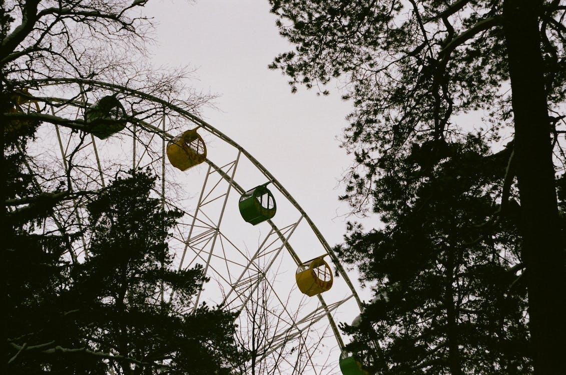 alacsony szögű felvétel, erdő, évszak