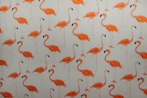 Бесплатное стоковое фото с апельсин, графический, декор, дизайн