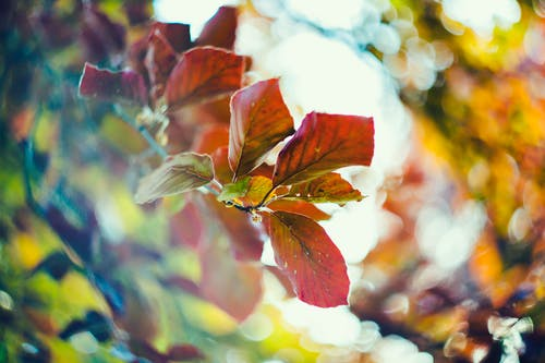 Gratis stockfoto met bladeren, bokeh, bokeh blur, buiten