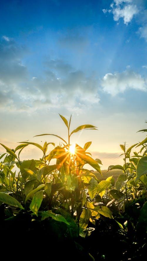 Kostnadsfri bild av bondgård, landskap, natur, solnedgång