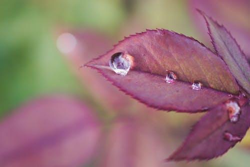 Gratis stockfoto met blurry achtergrond, close-up, concentratie, daglicht