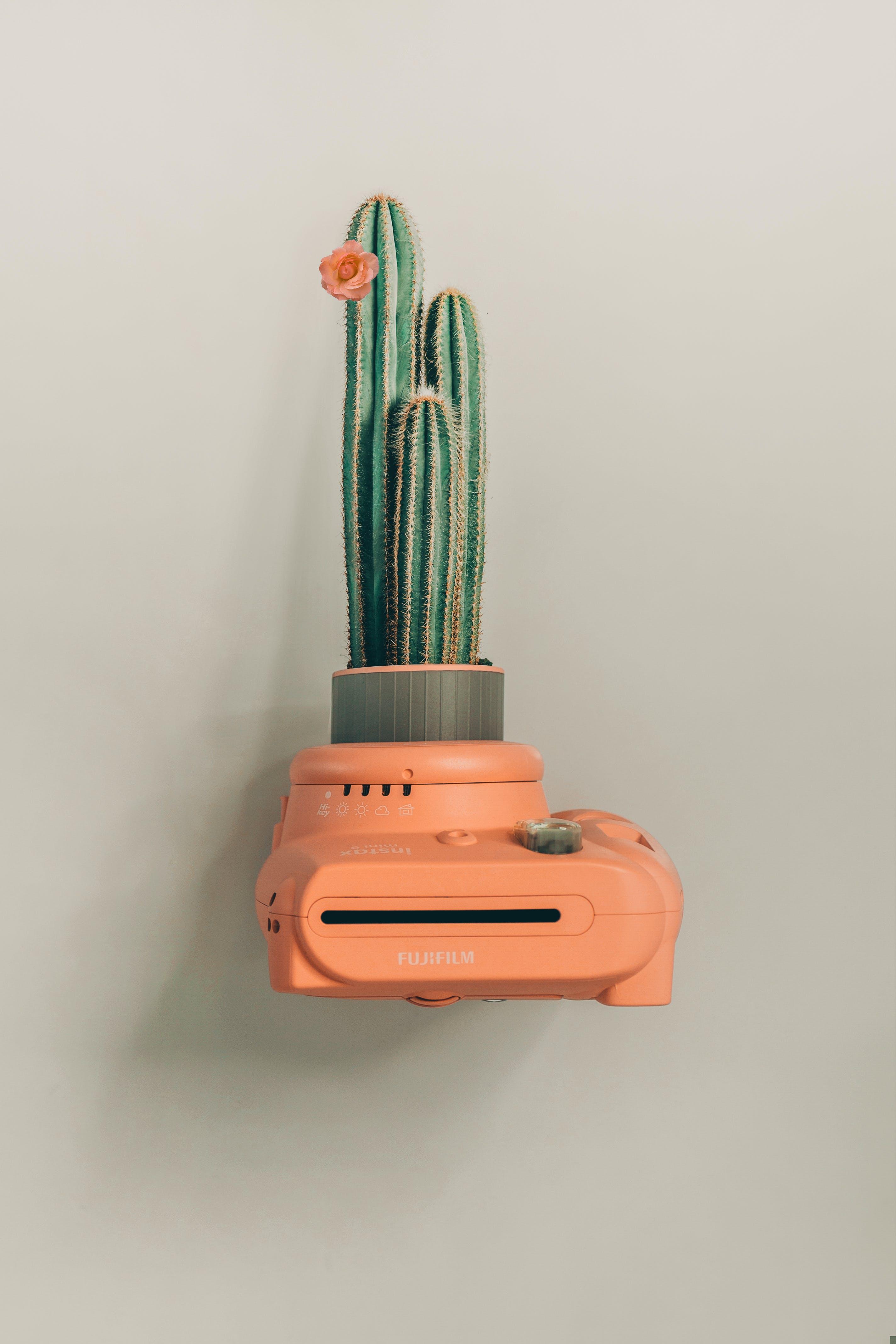 Green Cactus Plant on Orange Camera