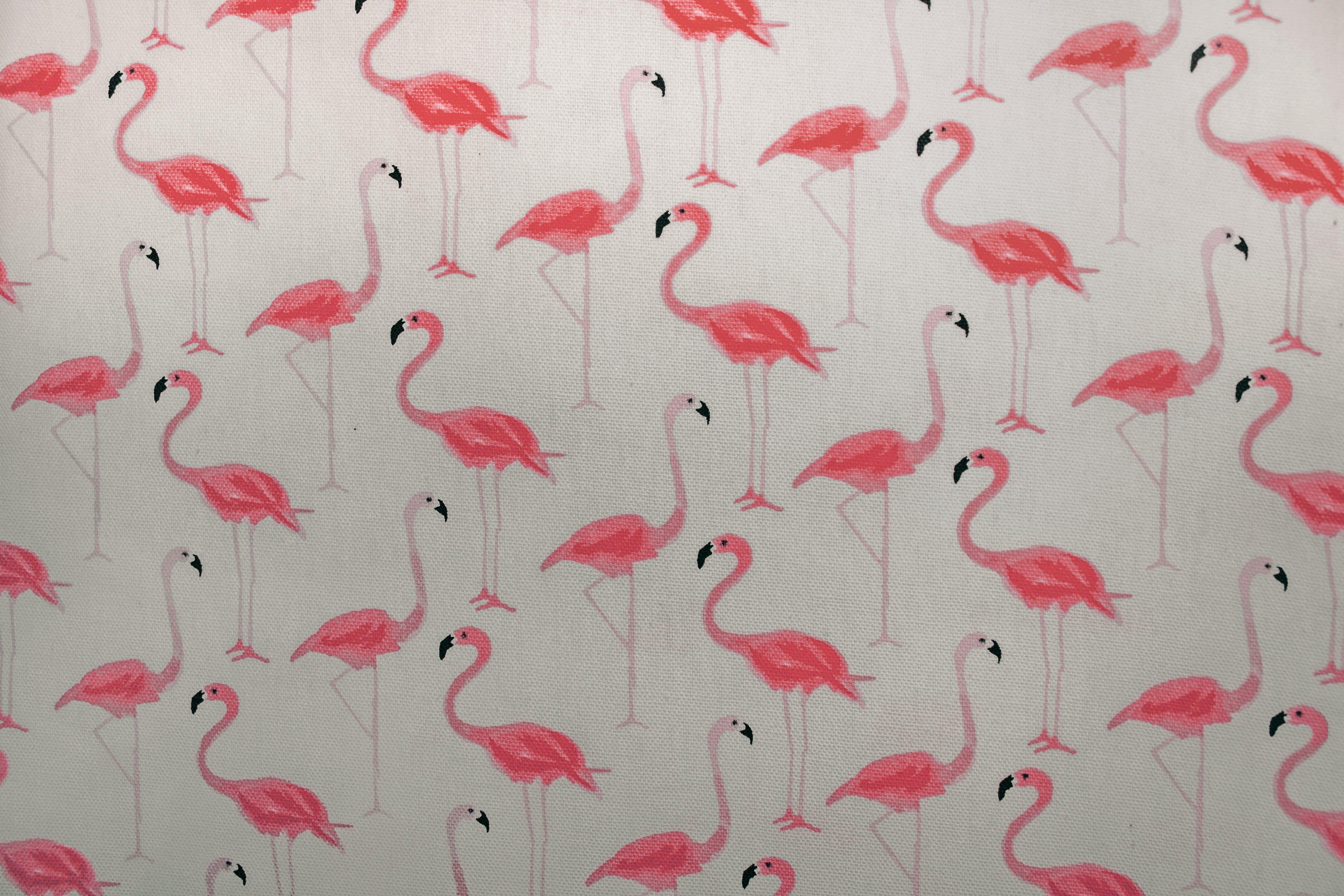 คลังภาพถ่ายฟรี ของ flamingoes, ทาสี, ผนัง, พื้นหลังสีชมพู