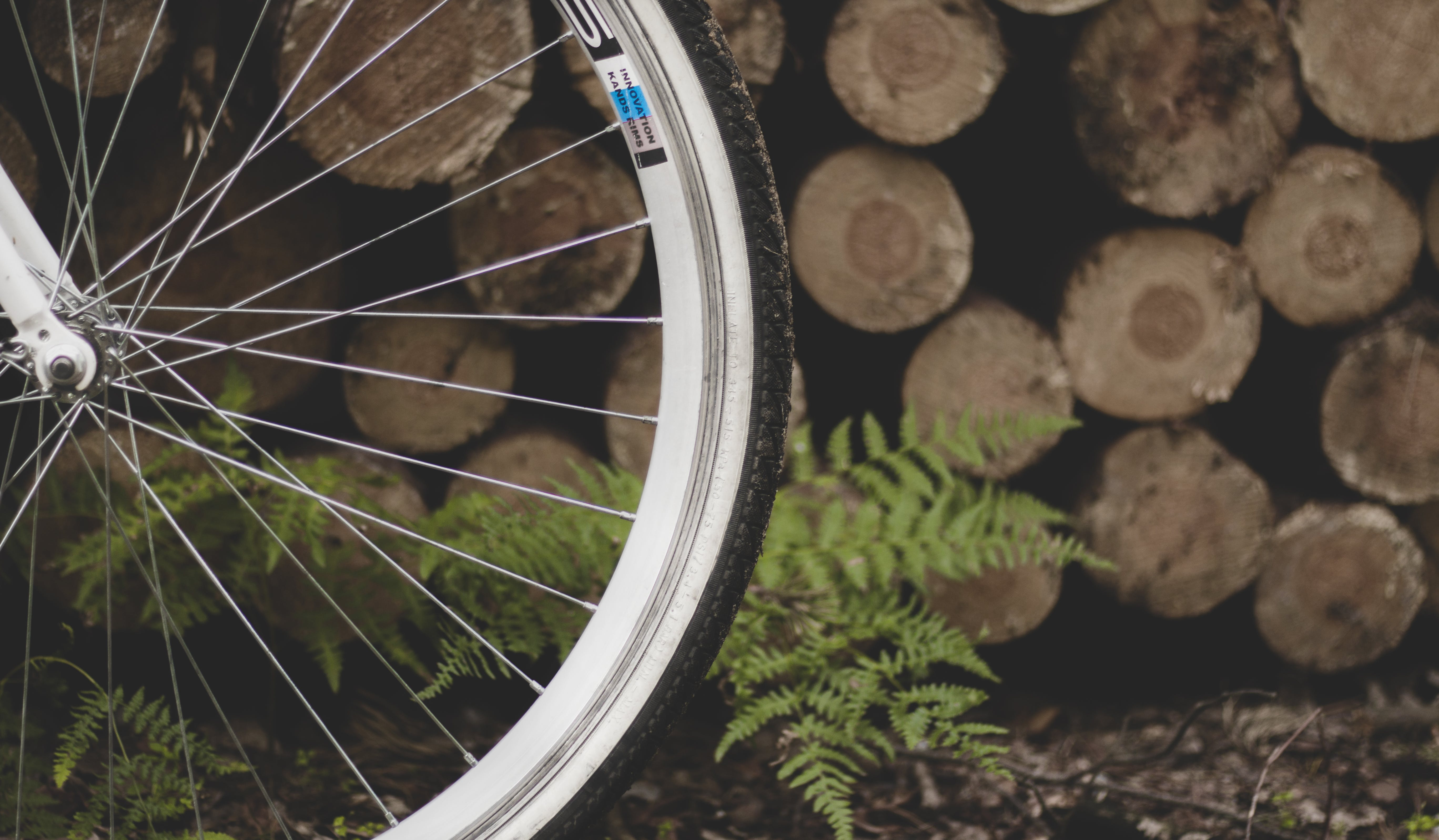 Bicycle Tire Near Fern Plant and Pile of Wood Logs
