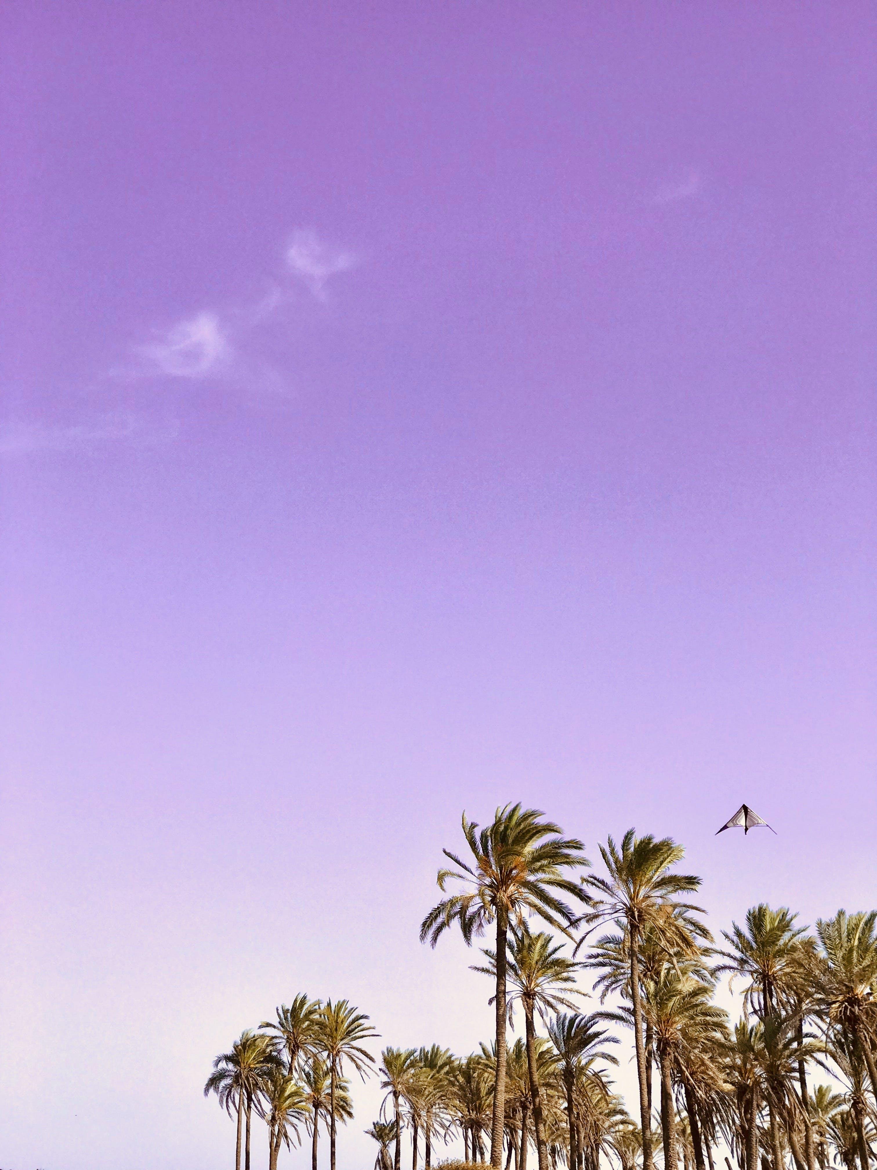 Free stock photo of kite, palms, photography, sky