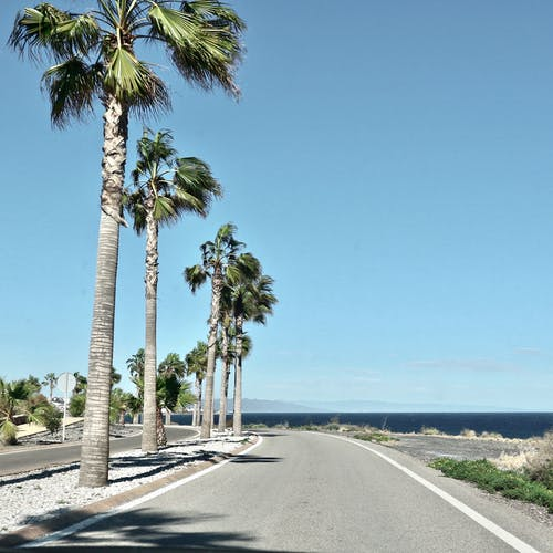 Free stock photo of beach, palms, photography