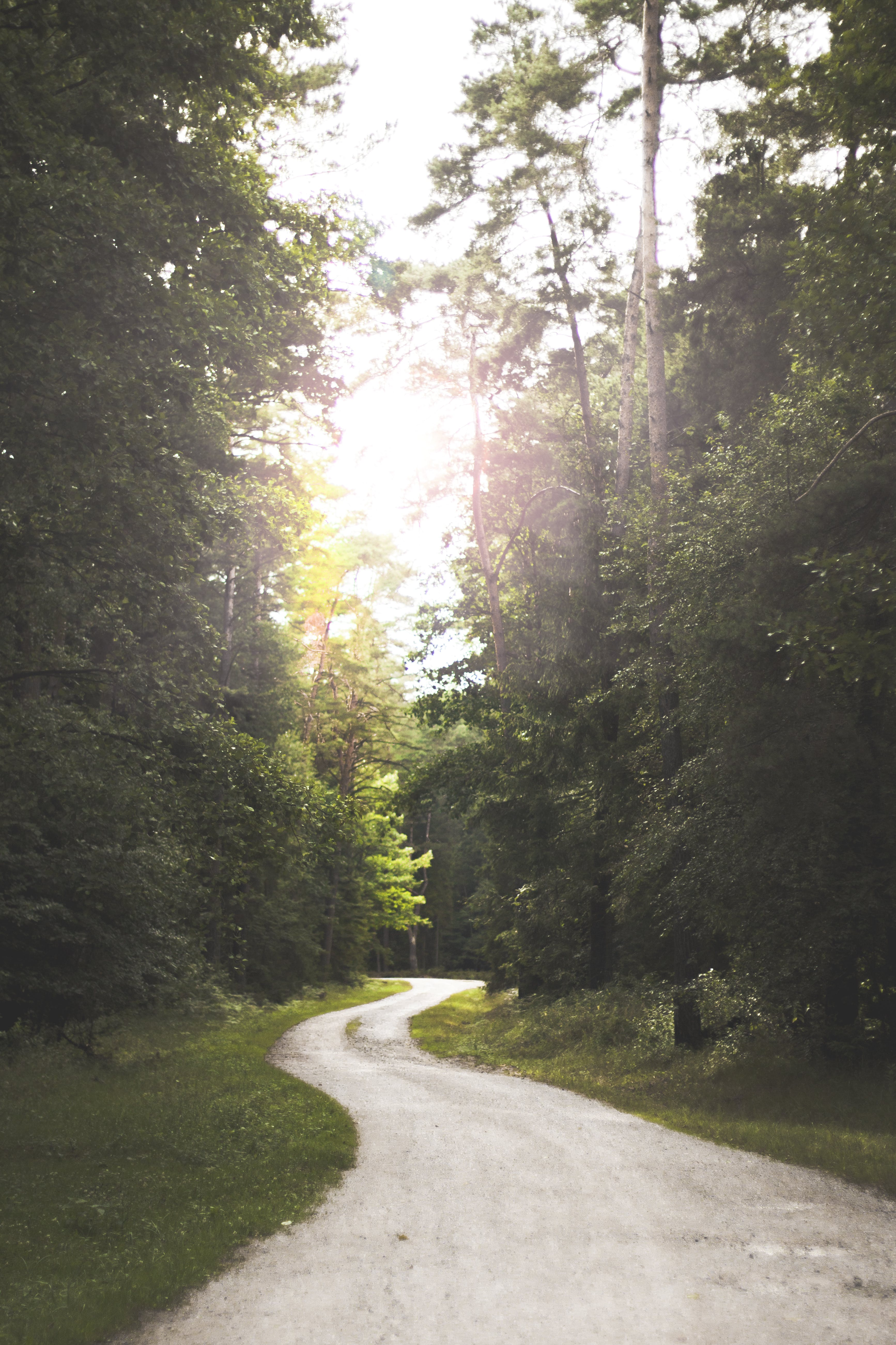 Winding Road Near Forest