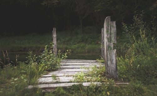 ウッドデッキ, パーク, 日光, 木の無料の写真素材