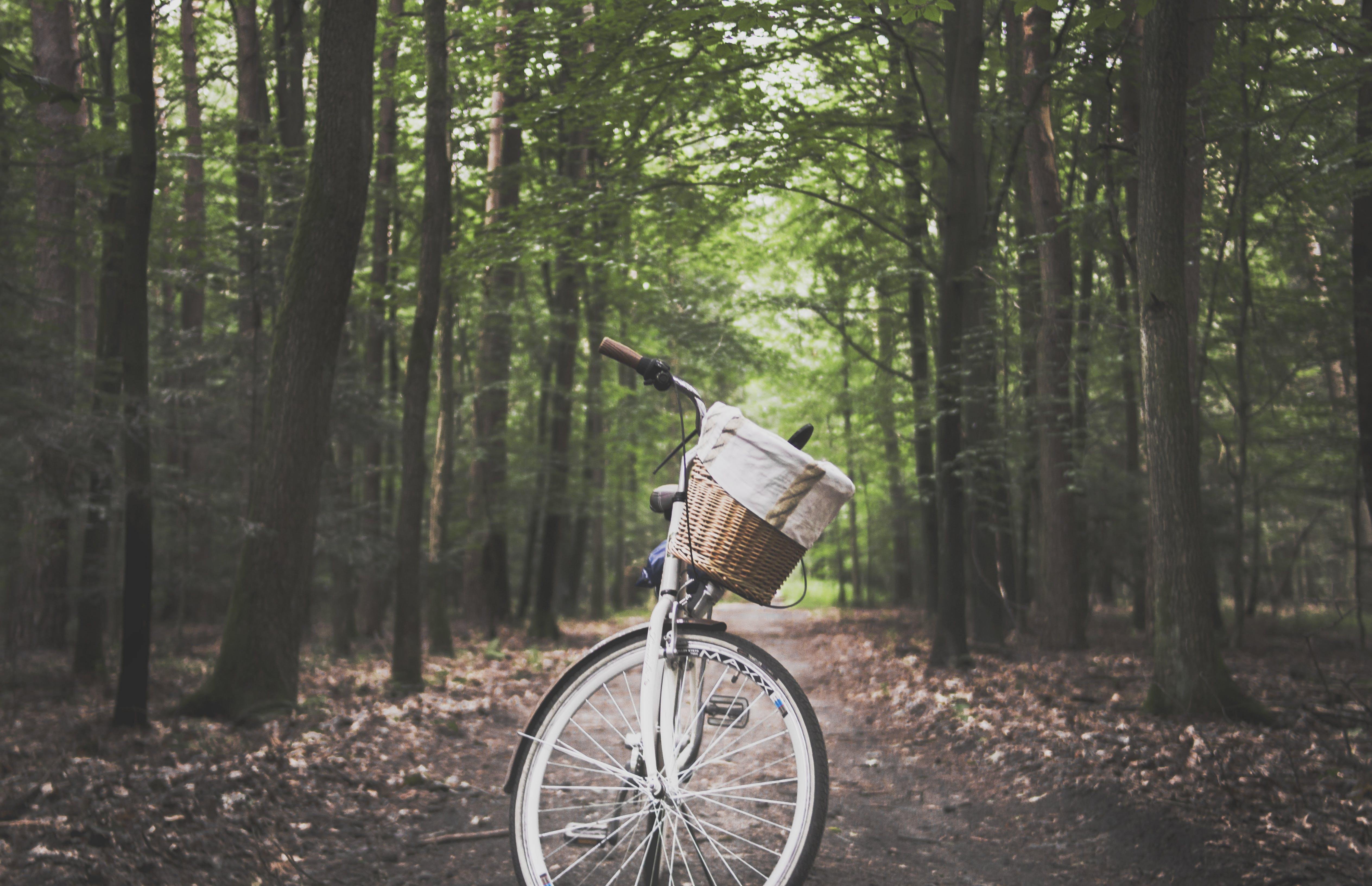 City Bicycle in the Middle of Forest Trail