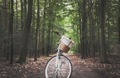 Photos gratuites de arbres, aventure, bicyclette, bois