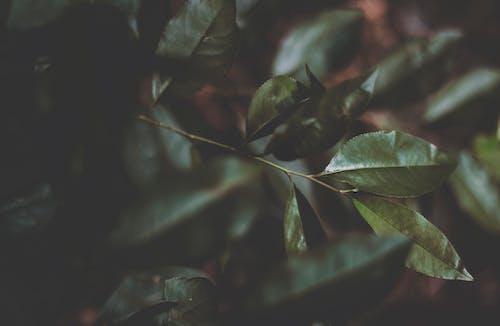 나뭇잎, 녹색, 배경이 흐린, 식물의의 무료 스톡 사진