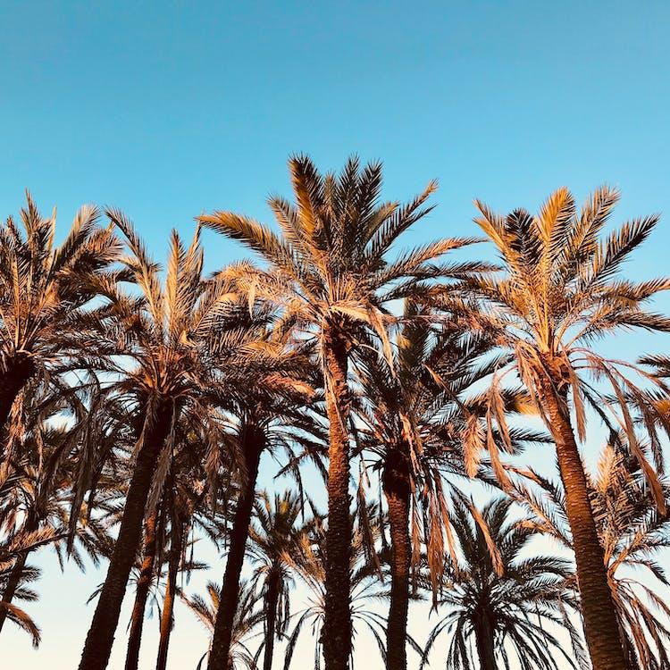 blå himmel, dagsljus, fotografi