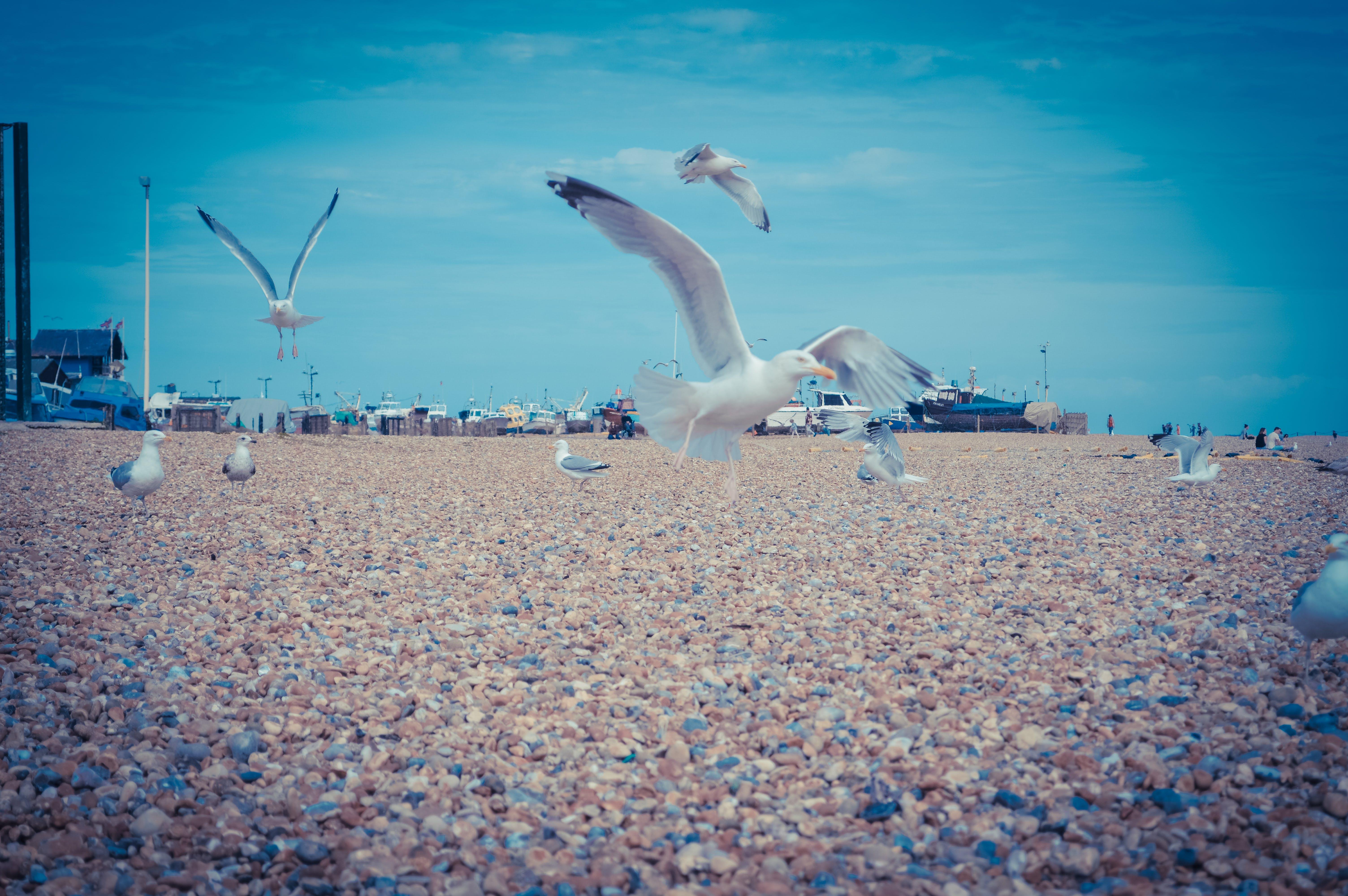Free stock photo of beach, england, pier, seagulls