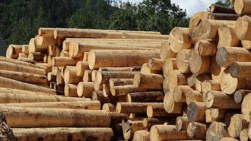 Free stock photo of deforestation, nature, tree trunks, trees