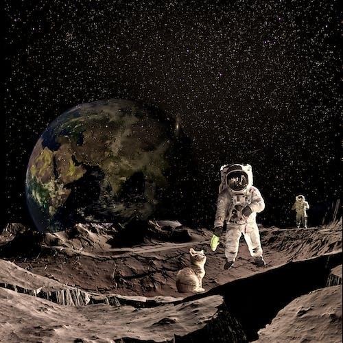 ネコ, 月の無料の写真素材
