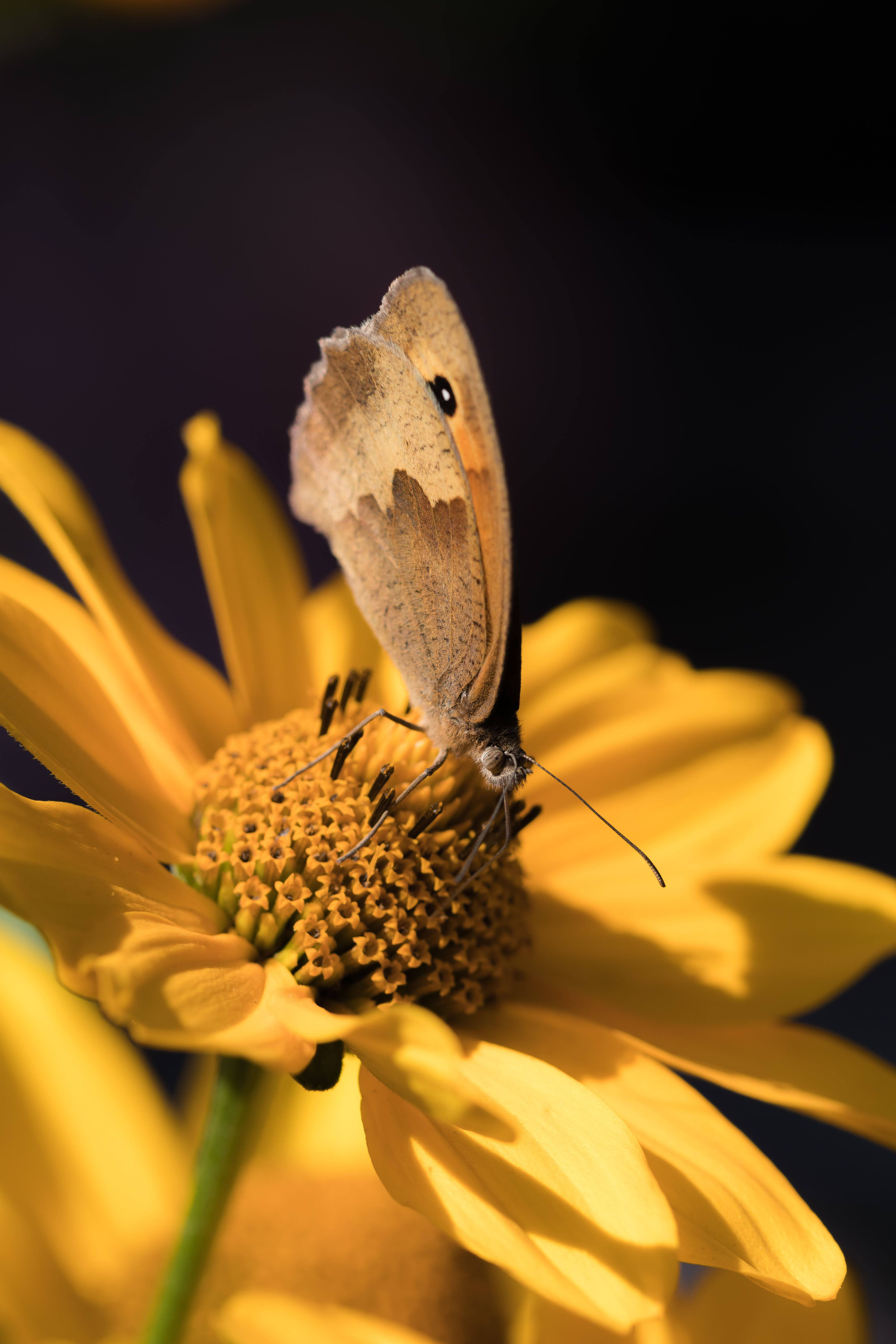 Free stock photo of garden, flower, insect, macro