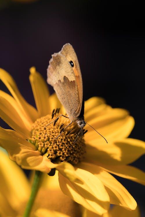Fotos de stock gratuitas de flor, insecto, jardín, macro