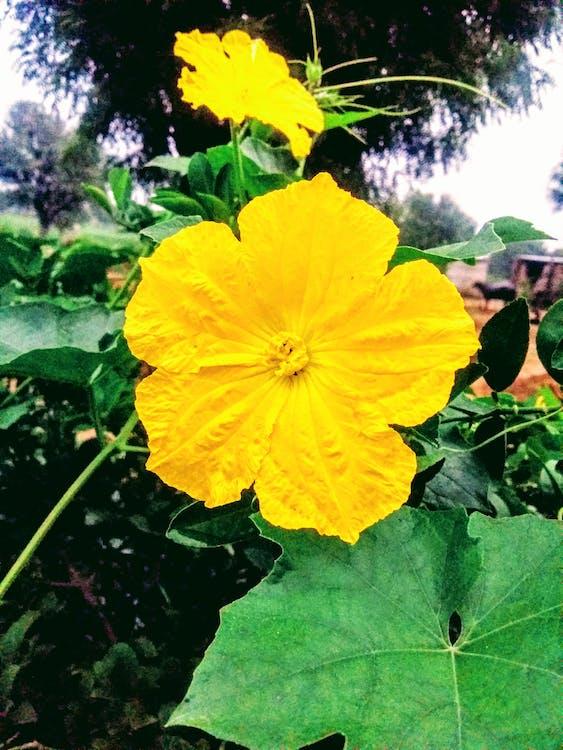 Immagine gratuita di colore verde, fiore, fiore giallo