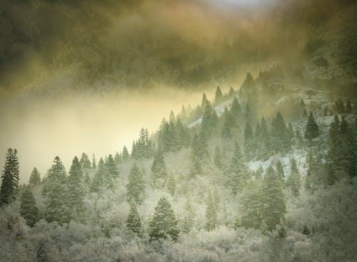 Δωρεάν στοκ φωτογραφιών με αειθαλής, ατμόσφαιρα, αυγή, βουνό