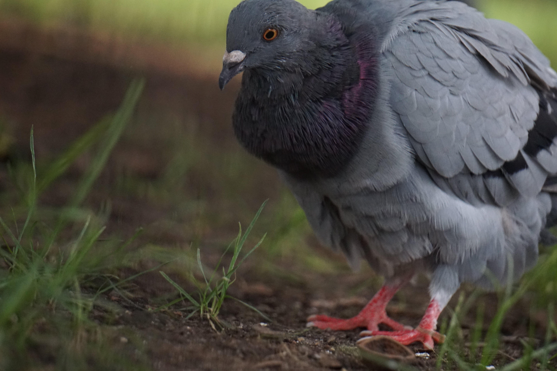 Free stock photo of animal photography, animals, bird, birds