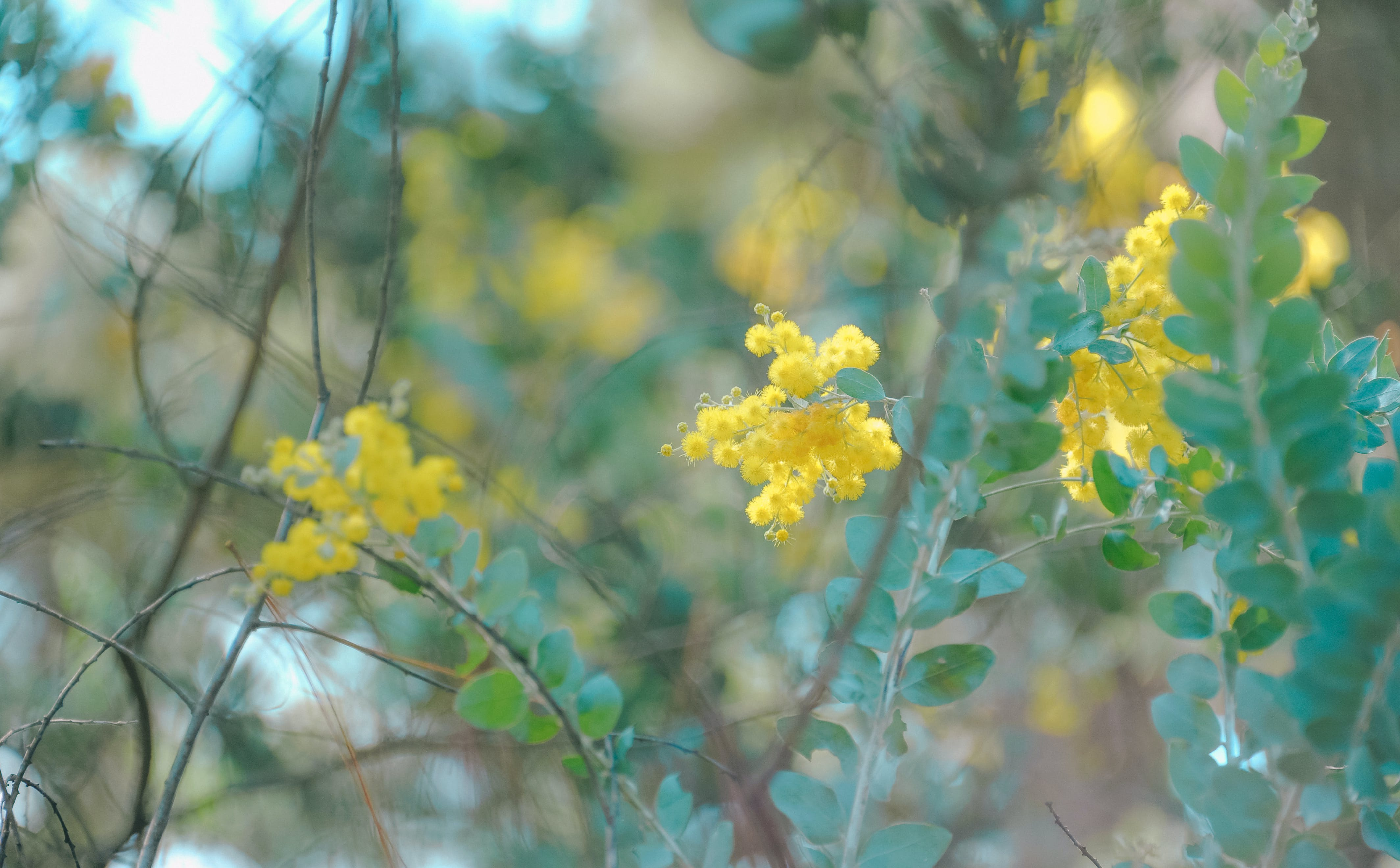 Shallow Focus Photography of Tree With Yellow Petal Flowers