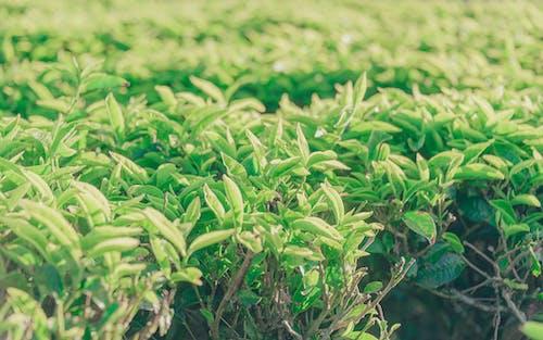 Ingyenes stockfotó farm, frissesség, környezet, levelek témában