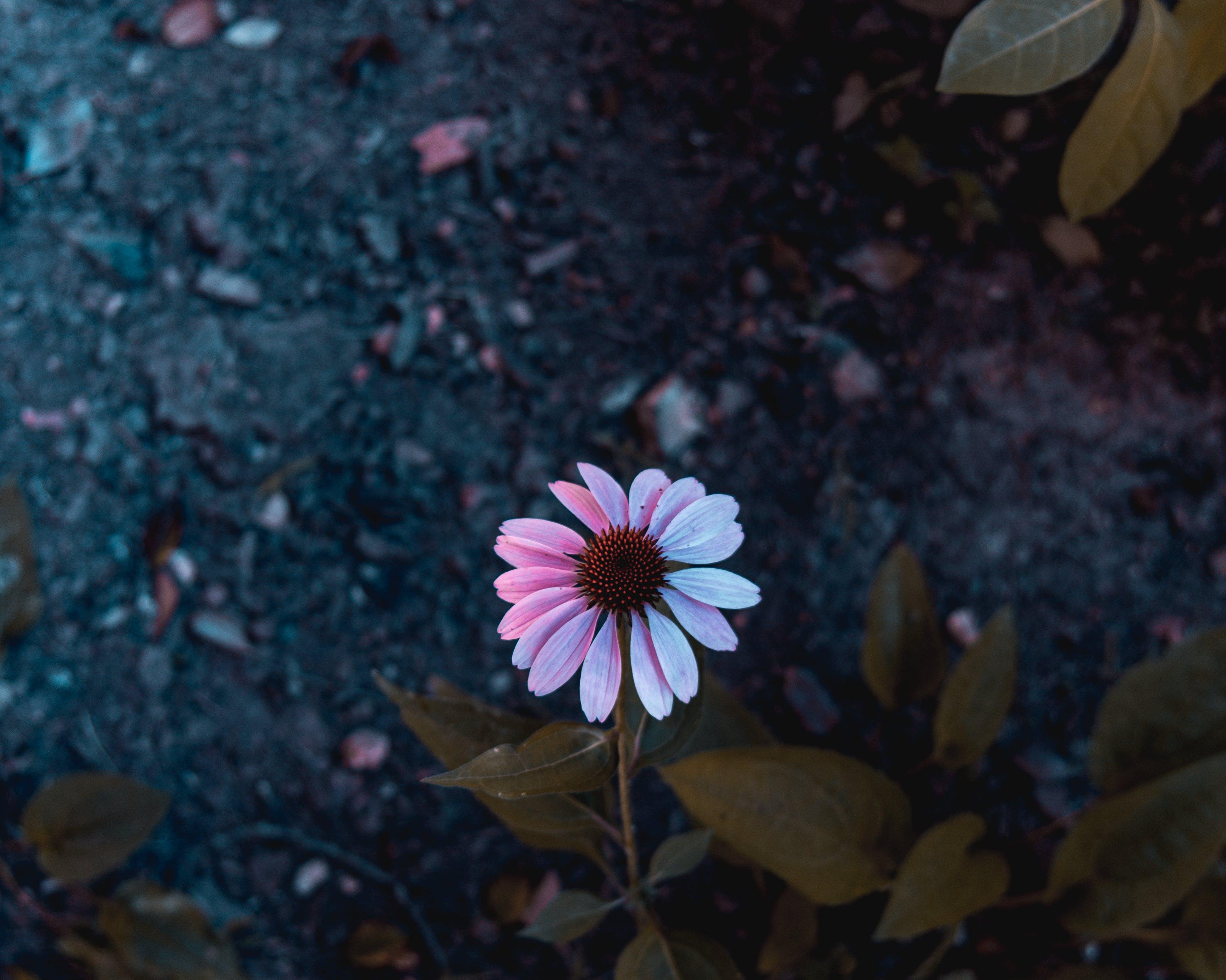 Základová fotografie zdarma na téma barvy, flóra, jasný, kvést