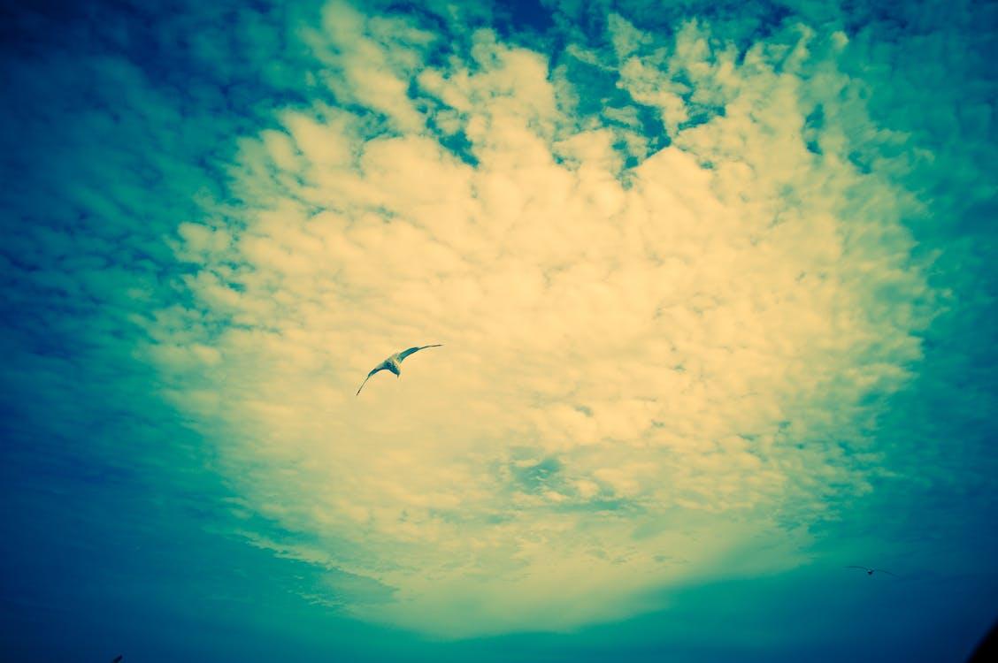 céu com cores intensas, céu espetacular, despreocupado