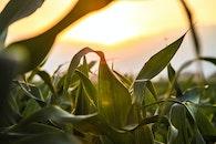 nature, field, sun
